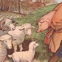 cuento carnero cerdos