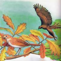 cuento del halcón y el ruiseñor