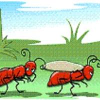 fabula de la vida hormigas