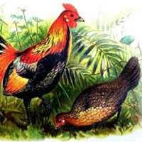 cuento de las perdiz y gallos