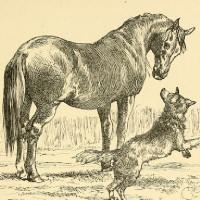 fabula del lobo y el caballo
